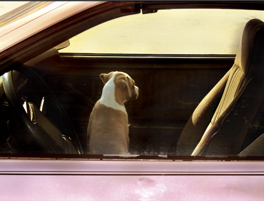 bronstein_dogs_cars_handpainted_book-8
