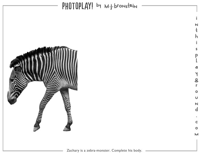 marcie-jan-bronstein-photoplay-zebra
