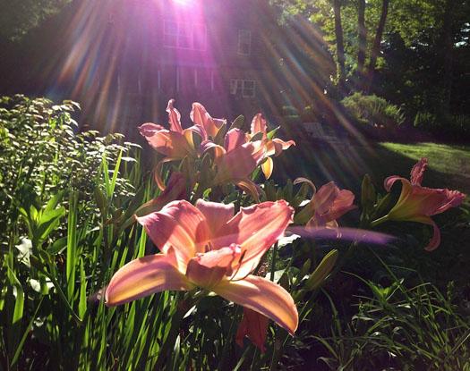 M J Bronstein garden photo