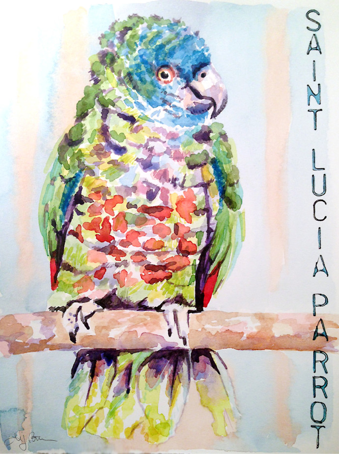 Saint_Lucia_Parrot_MJBronstein_watercolor
