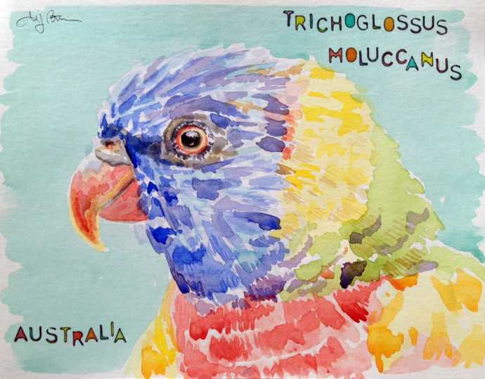 rainbow_lorikeet_australia-Bronstein-watercolor