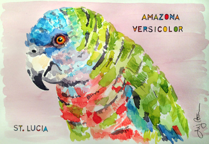 amazona_versicolor-st.lucia-bronstein-watercolor