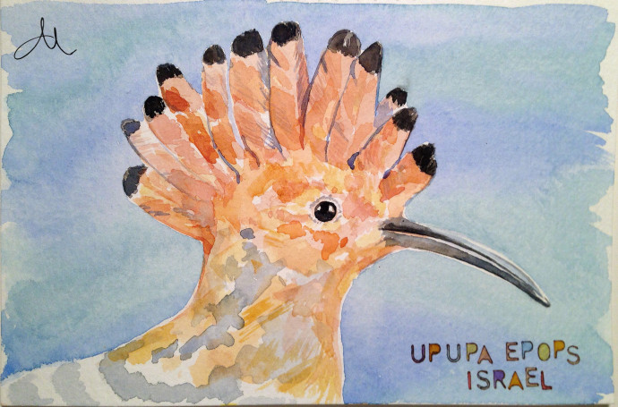Mattina_Blue_watercolor_hoopoe_israel