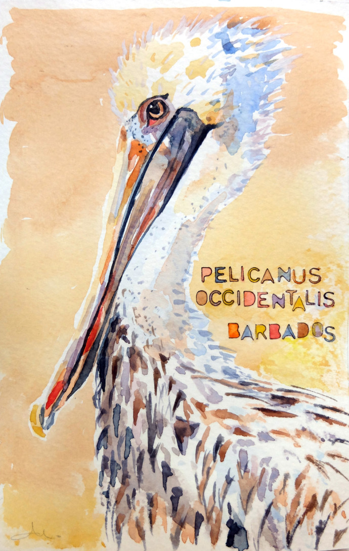 pelicanus-occidentalis-m.j.bronstein-watercolor