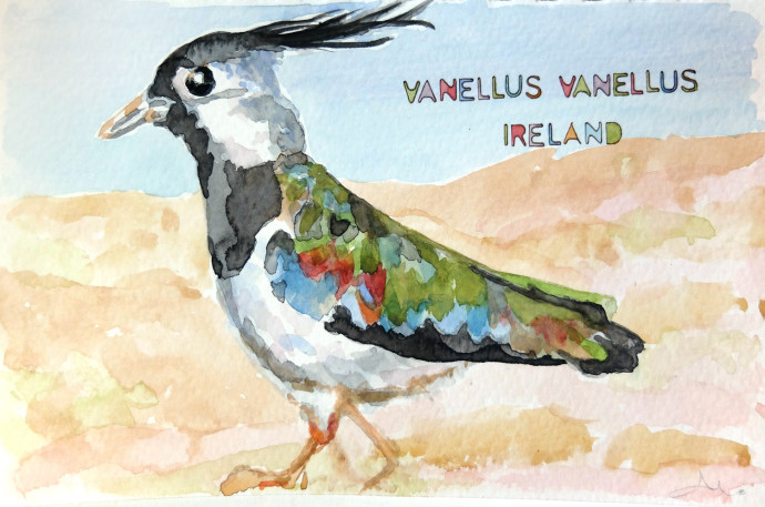 vanellus-vanellus-M.j.Bronstein-watercolor