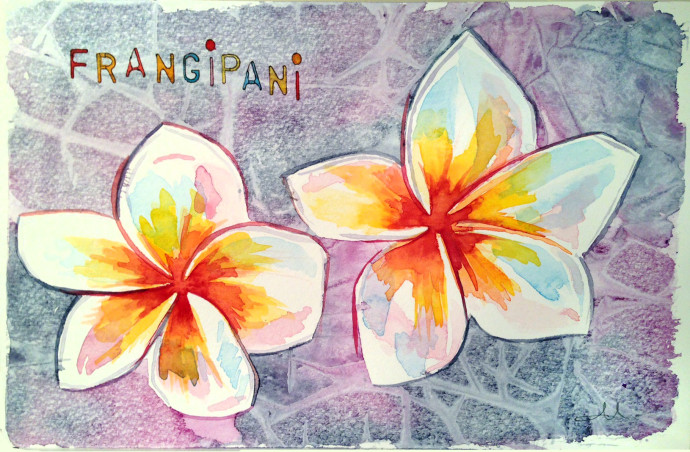 frangipani-mattinablue-watercolor
