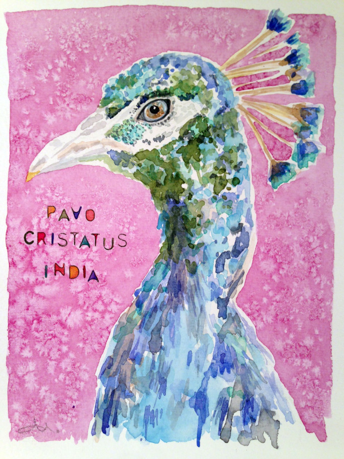 india-watercolor-mattinable